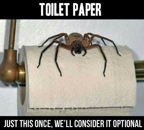 Giant scary spiders memes - photo#3